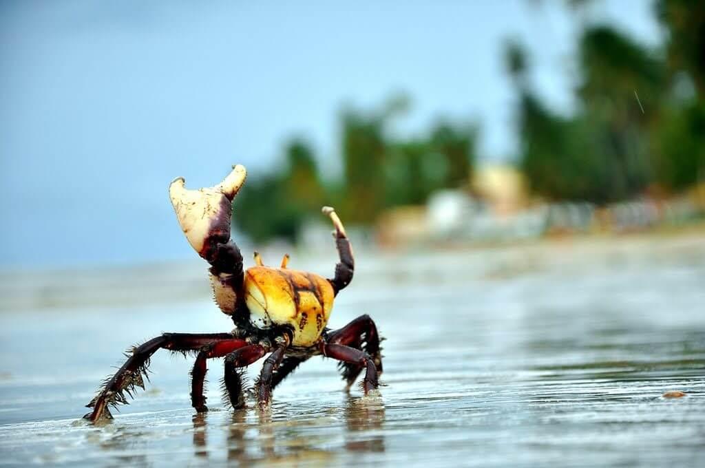 gp4us - Planejamento caranguejo